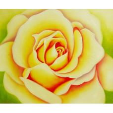 """""""Чайная роза"""", холст, масло, 50х60см"""