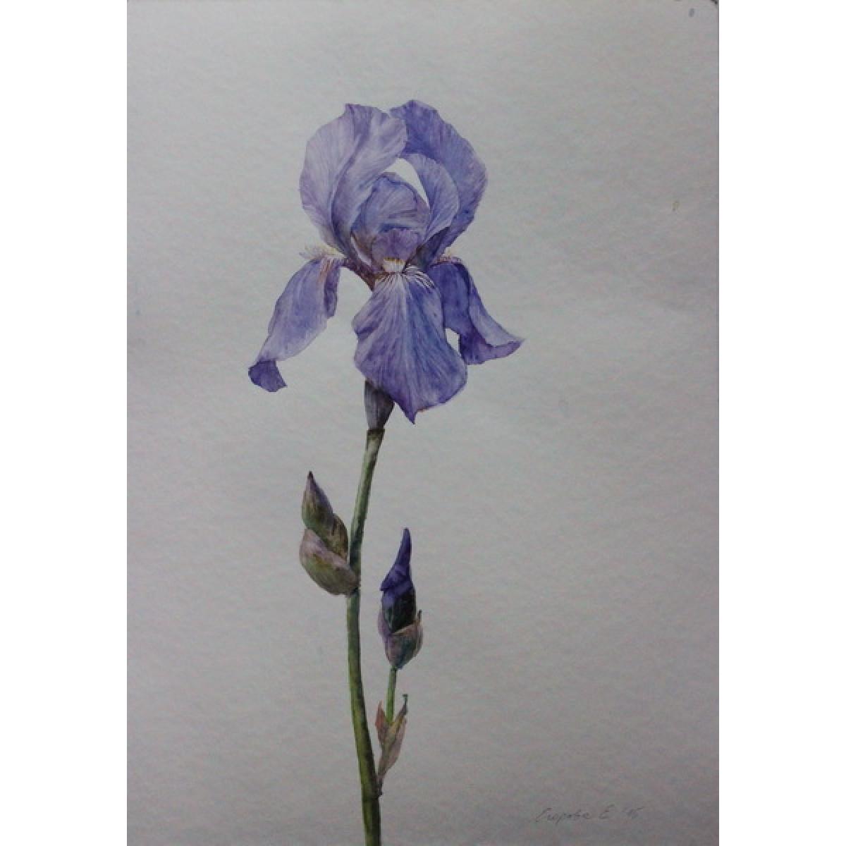 """Картина """"Фиолетовые ирисы"""", акварель, бумага, 40х30см"""