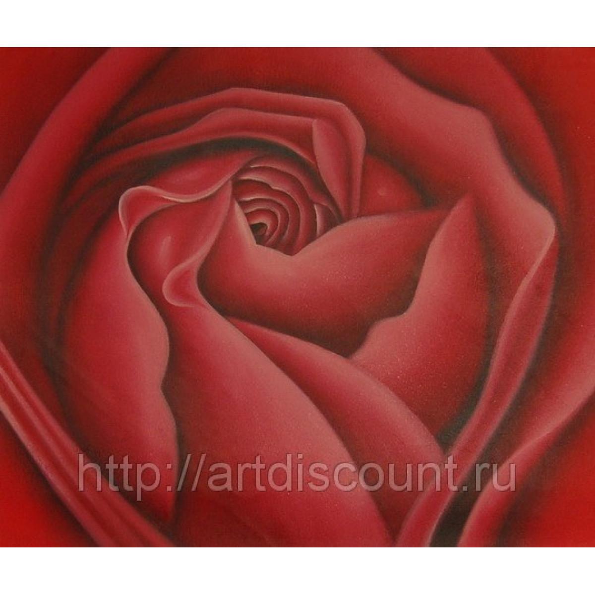 """Картина """"Роза 2"""" холст, масло, 50х60см"""